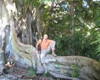 Traper - Ponta Delgada, fikus w parku José do Canto