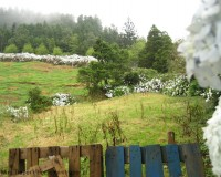 Traper - hortensje, dolina Lombadas