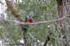 Mini Traper - Ptaki